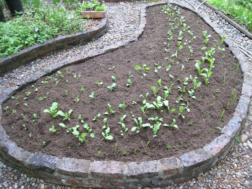 the planted vegetable bed