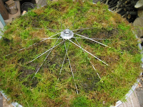 wheel with moss